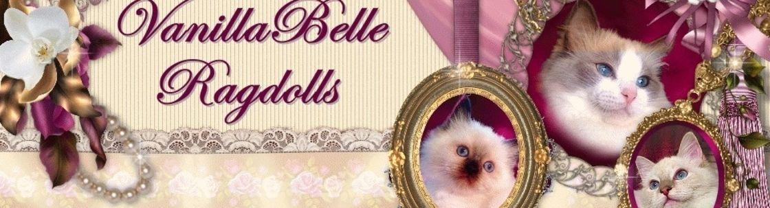 Vanillabelle Ragdoll Kittens New York Clinton Area Alignable