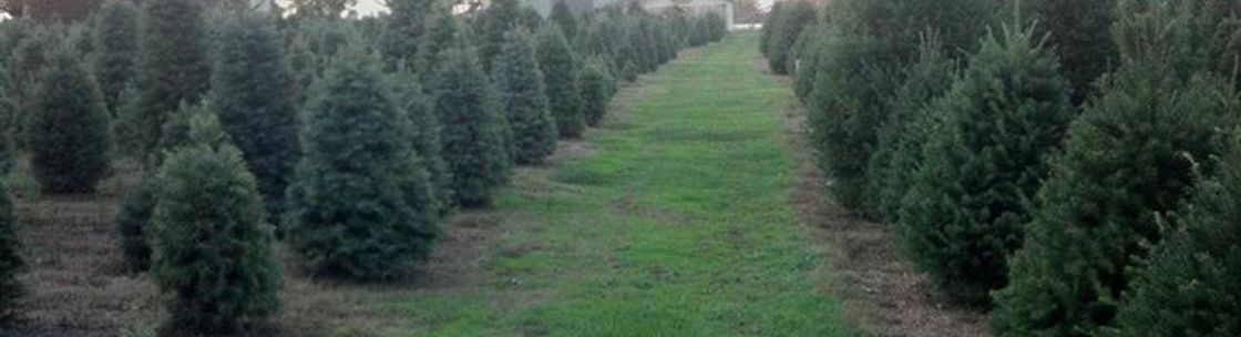 Wagner Christmas Tree Farm Lebanon Pa Alignable