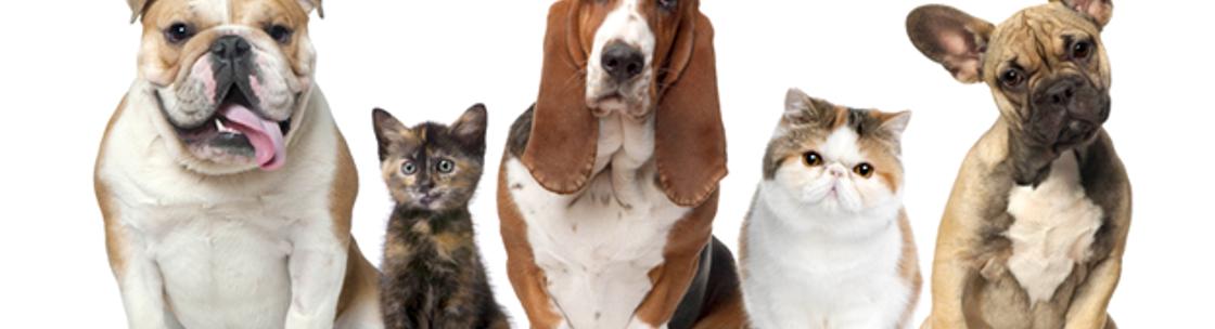 Hope Veterinary Clinic Pa Amarillo Tx Alignable