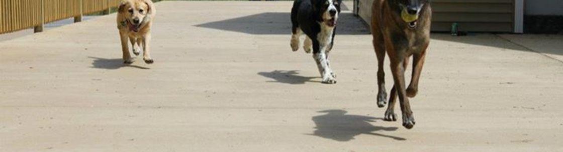 Free Dog Plaistow Nh Alignable