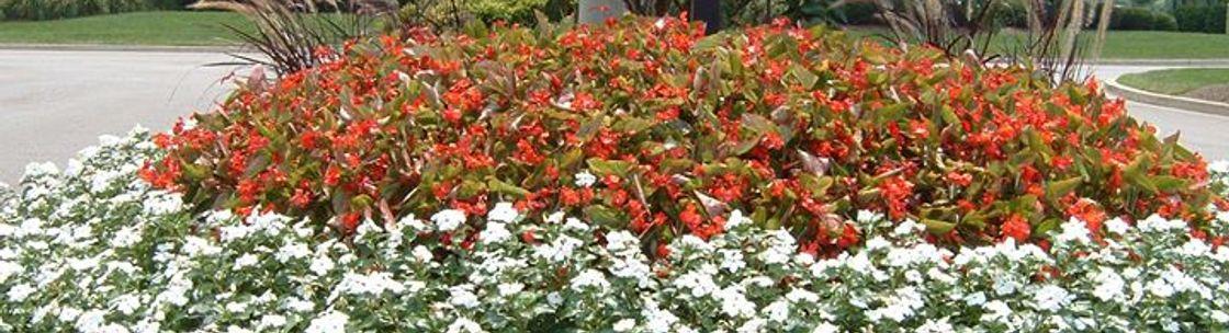 Color Burst Landscapes Brentwood Tn Alignable