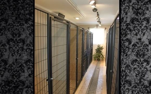 Luxury dog boarding and grooming. by Canine Design Salon ...