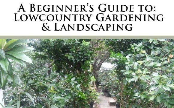 The Beginner S Guide To Lowcountry Gardening Landscaping By The