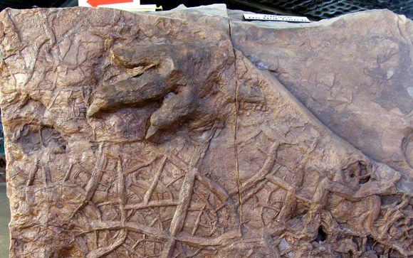 Early Jurassic Dinosaur Footprints By St George Dinosaur Discovery Site At Johnson Farm In Saint George Ut Alignable