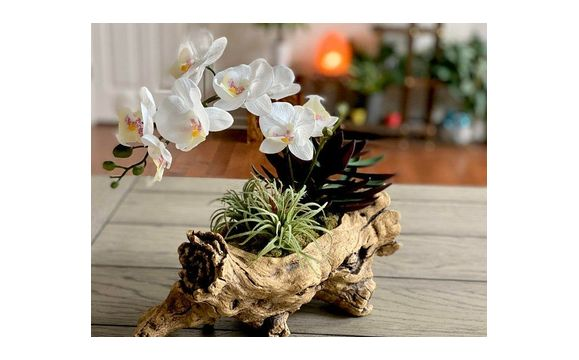 White Orchid Faux Flower Arrangement With Succulents Moss Resin Tree Trunk Container Tropical Flowers By Chicago Silk Florist In Gilberts Area Alignable